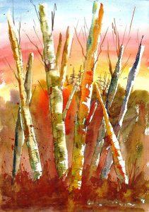 Alaskan Birches