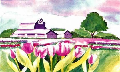 Tulips And Barns